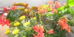 Individuelle Blumenkübel