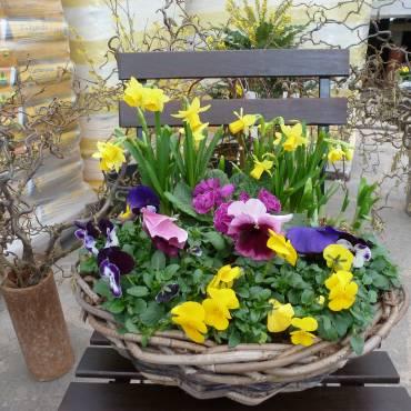 Beginn der Frühlingsbepflanzung