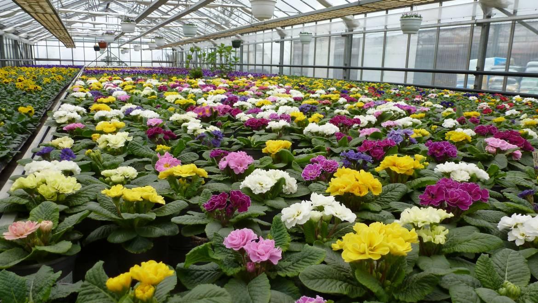 Garten und landschaftsbau aachen wir ber uns g rtnerei for Gartengestaltung jaspers