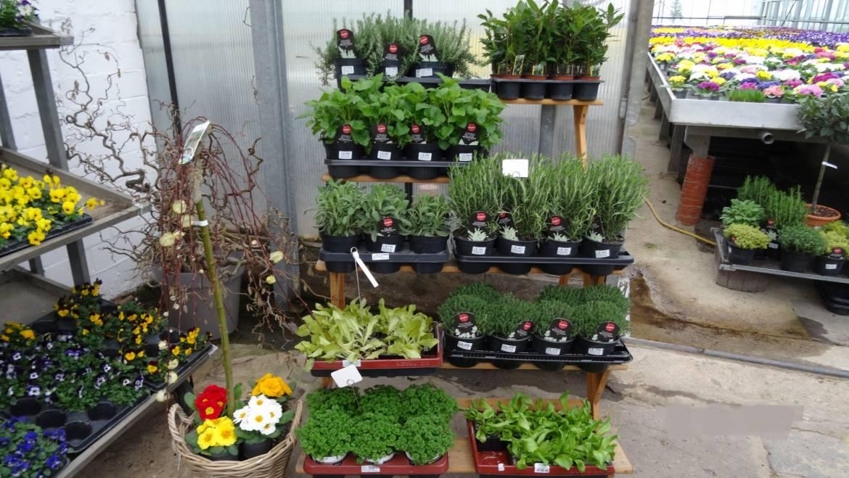 Blumenzwiebel und Gemüse